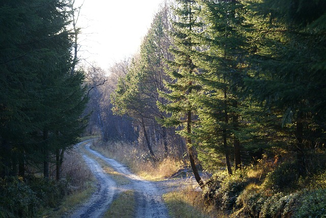 forest-1035074_640