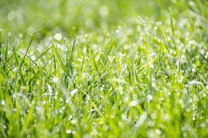 grass-1326759_640